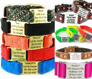 custom dog collars with scrufftag nameplate