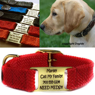 custom dog collars with scrufftag name plate